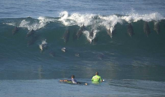 Bodyboarding with the Dolphins at the North Jetties.....