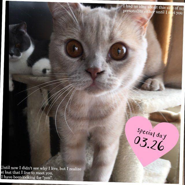 ・ ・ おはようにゃん😺 ・ 今日は久しぶりにマッタリの朝✨ ・ ・ #ブリティッシュショートヘア #ブリショー #愛猫 #愛猫同好会 #ねこ #ねこ部 #ねこ好き #ねこすたぐらむ #関西ねこ部 #猫 #多頭飼い #犬と猫のいる暮らし #cat #cats #catlover #catstagram #catsofinstagram #instacat #lovelycat #cute #family #britishcat #britishshorthair