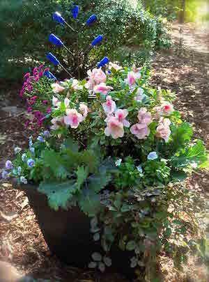 Recipe for a Gorgeous Encore Azalea Container Garden