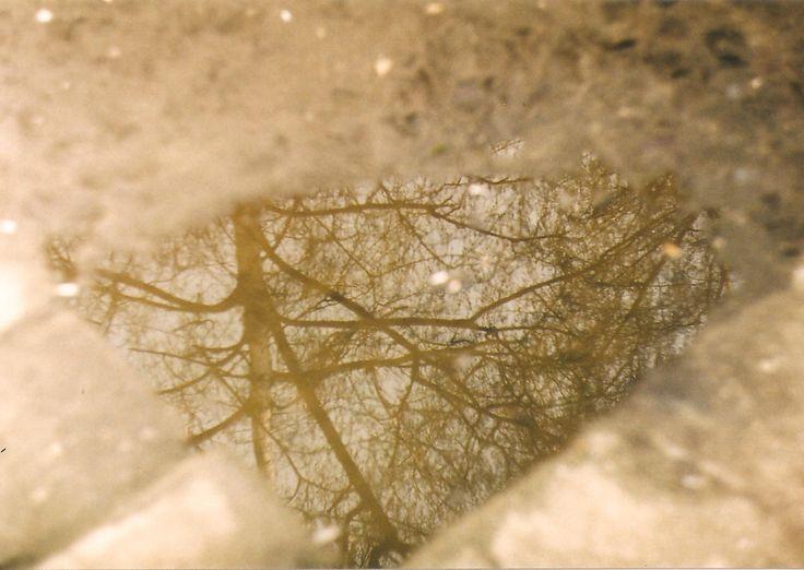 tree, zenit