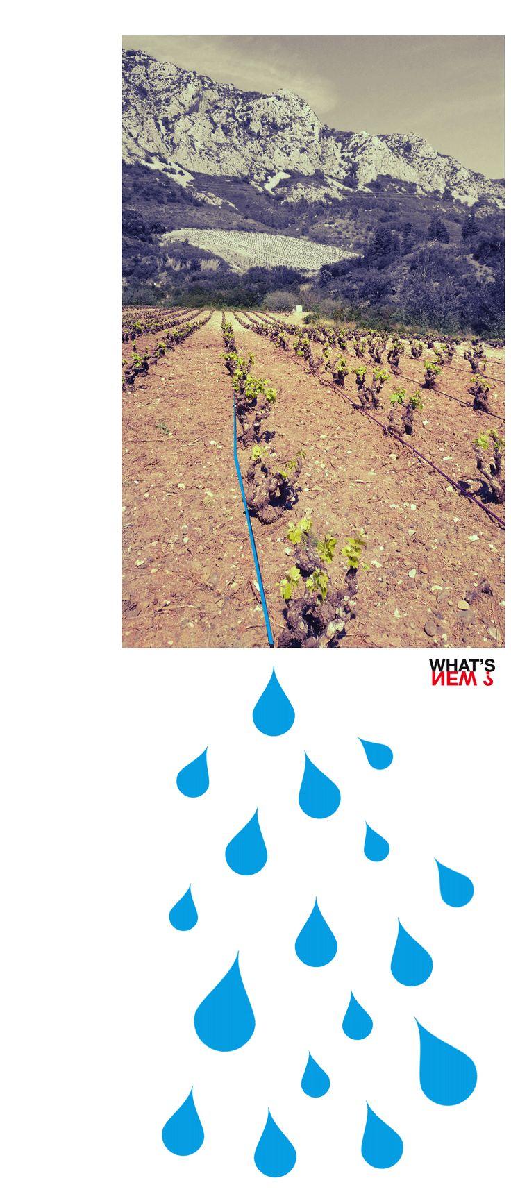 WN JUIN 2014 - Irrigation au Mas Janeil - Graphisme & Developpement Chloé VEYSSET & Matthieu HARQUIN