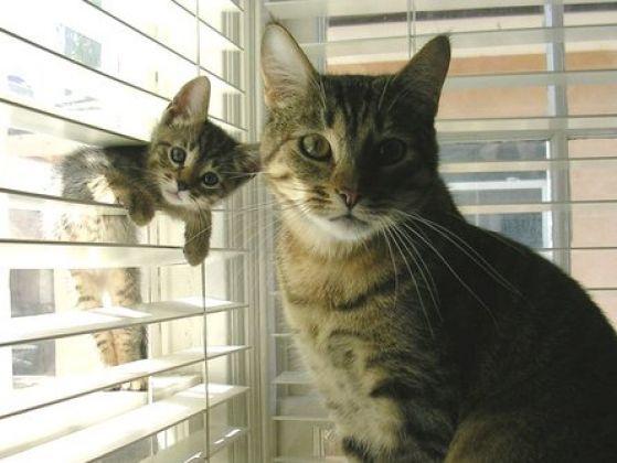 #Chats huuuuuuu <3 #cute #kitty
