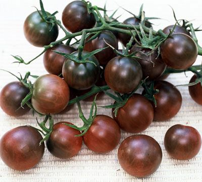 Black Cherry Tomatoes. They were prolific, large (for cherry tomatoes – a full mouthful) of dark black-red awesomeness. They practically refused to split (even though watering was, at times, erratic) and they were healthy and strong and honestly one of the best tomatoes I have ever grown. People loved them at the farmers market too.    Black Cherry Tomato's are the best tasting Tomato I have ever planted in my 67 years, try them!!!