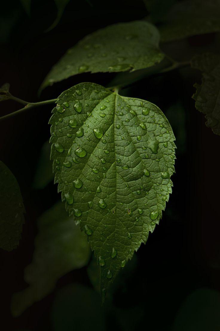 Portraits in the rain II by Marko Cavka on 500px