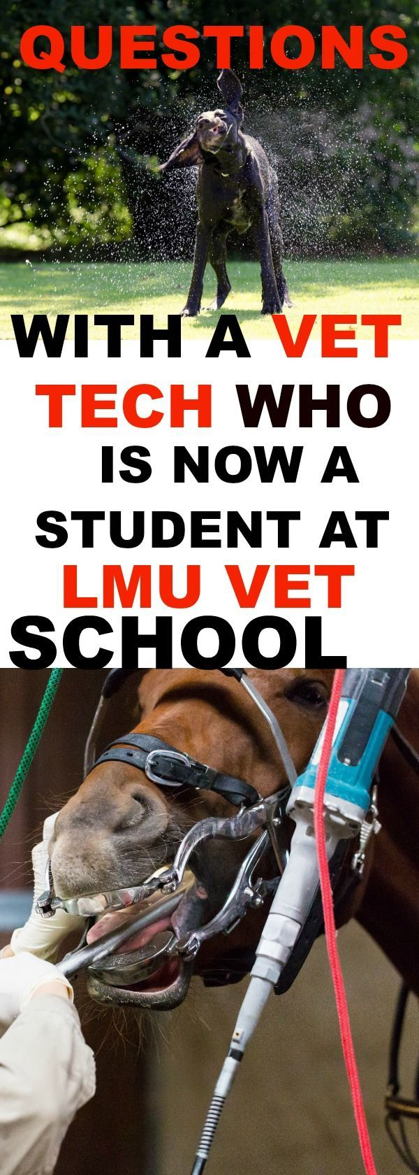 Questions with Chris, a veterinary medical student at LMU, who started out as a licensed veterinary technician. He tells us how he got into LMU after applying to 2 cycles and 14 veterinary schools.