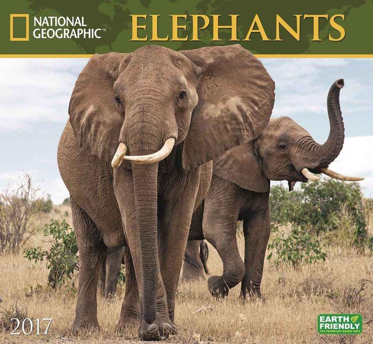 National Geographic Elephants Deluxe Calendar 2017