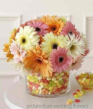 these are the daisy's
