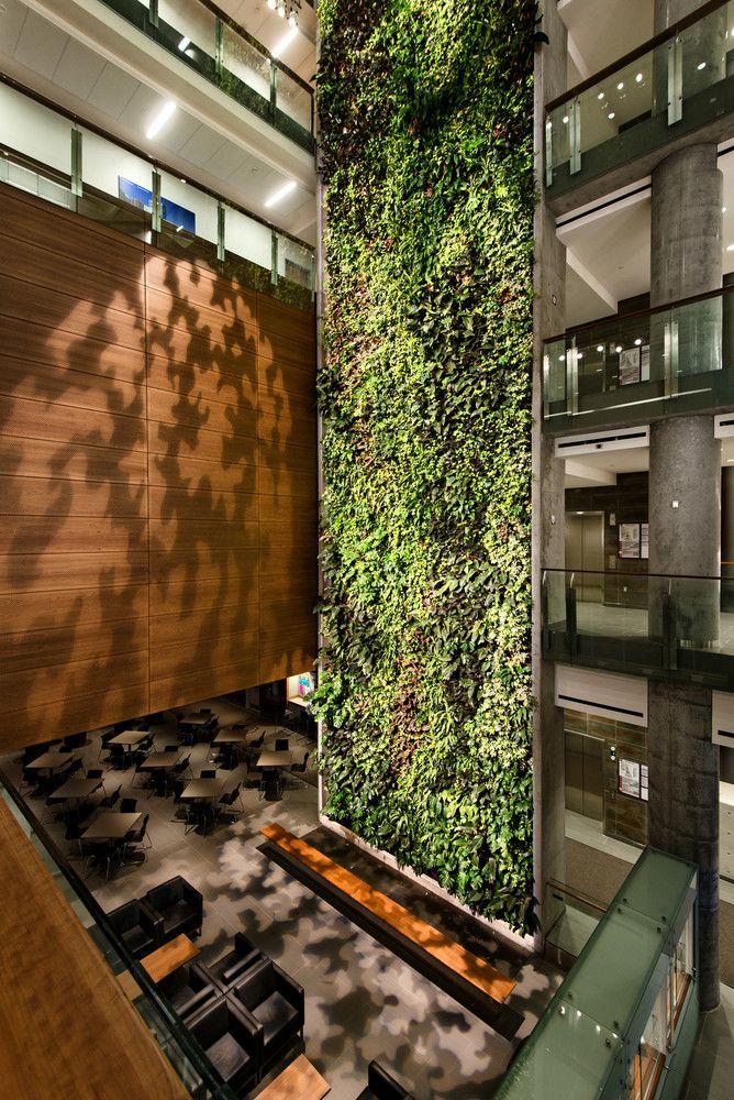 Jardins verticais purificam o ar e que dão vida a paredes sem graças,