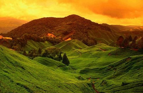 Cameron highland- beautiful highland in malaysia http://www.indiaunimagined.com/top-25-places-to-visit-in-bangalore/