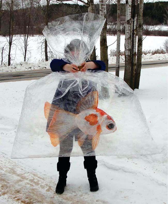 packing tape goldfish