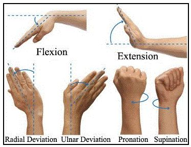 """I used to use the terms abduction and adduction. I changed to radial and ulnar deviation. Ulnar means towards the Ulna bone, the """"outside"""" bone of the forearm. Radial deviation refers to the Radius bone, the """"inside"""" bone"""" of the forearm. Abduction (""""taking away"""") and adduction  have the inverse sense to pianists, becase they are from the point of view of the palms facing upward. So radial and ulnar deviation are more clear because we think from the point of view of the palms facing…"""