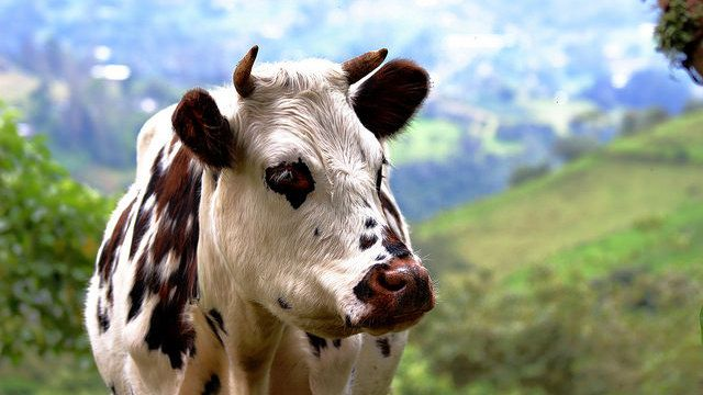 Colombia Travel: Seeing Where Animals Roam Freely
