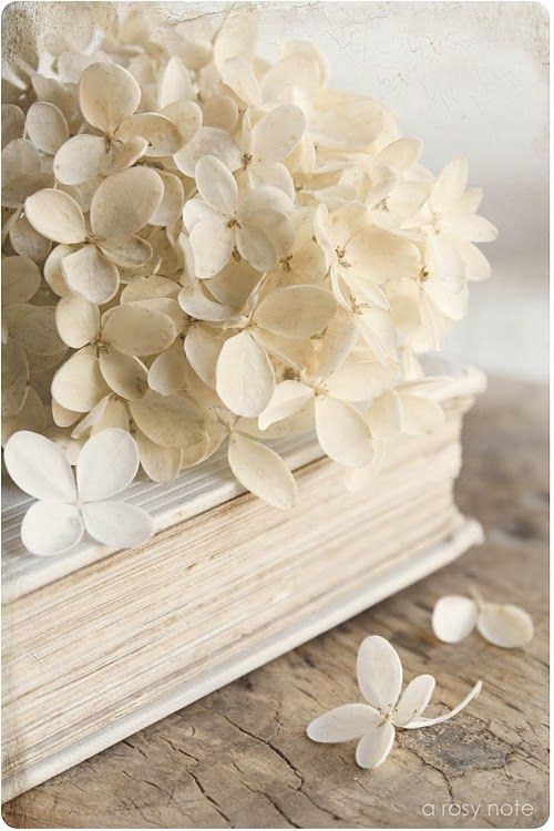 .Old Book, White Flower, White Wedding, Vintage Book, Style Inspiration, Colors, Beautiful, Cream, White Hydrangeas