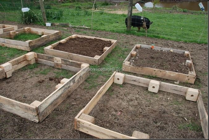 raised beds made from old pallets and filled with compost enriched with chicken manure - the very best manure for veggies.