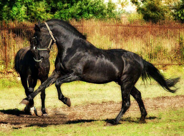 seltenste Pferderasse 6 (1)   – 20 fantastic breeds of horses