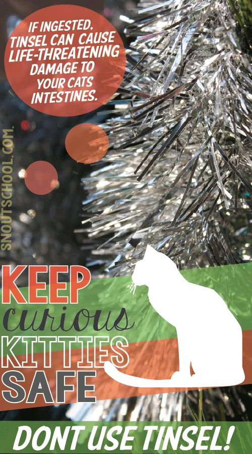The best holiday gift for your cat is to keep them safe. If you're a vet tech or veterinarian, remind kitty owners that it's not safe to have tinsel around cats! www.snoutschool.com