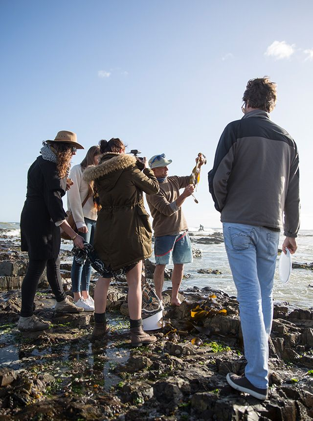Urban foraging and cooking in Cape Town - Eatsplorer Magazine | Book the best food experiences in South Africa