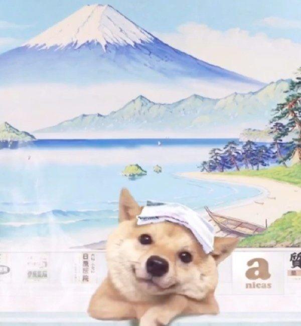 インスタで話題 お風呂に入る柴犬の 絶妙な表情とクセ いぬのきもちweb Magazine 犬のおもしろ写真 美しい犬 いぬ