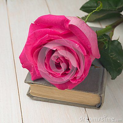 Single pink rose on the old book