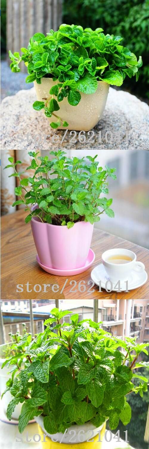 [Visit to Buy] 200 Lemon Mint Seeds potted flowers and plants  seasons seeds edible flowers in bonsai #Advertisement