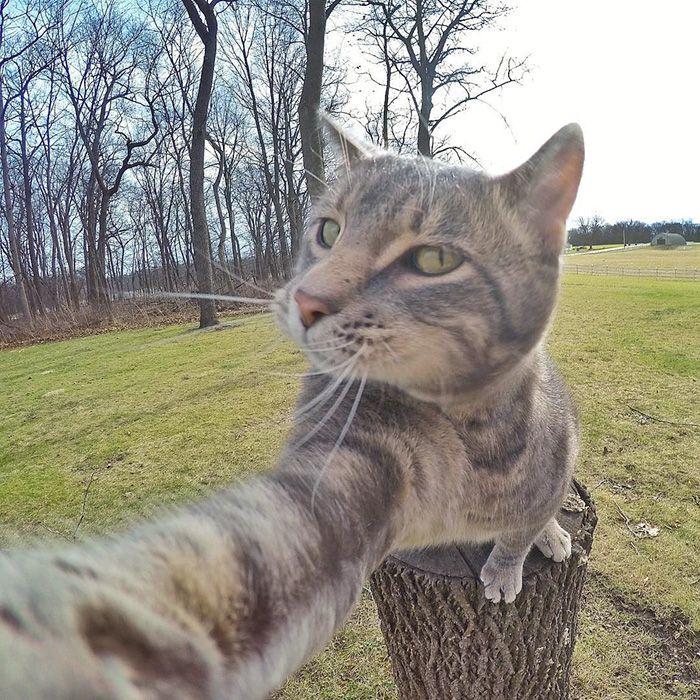 Ce chat qui fait des selfies mieux que vous  2Tout2Rien