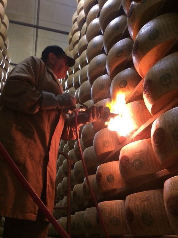 Wheels of Parmigiano Reggiano being given the DOP seal of approval by Adriano 'il Marchiatore'.