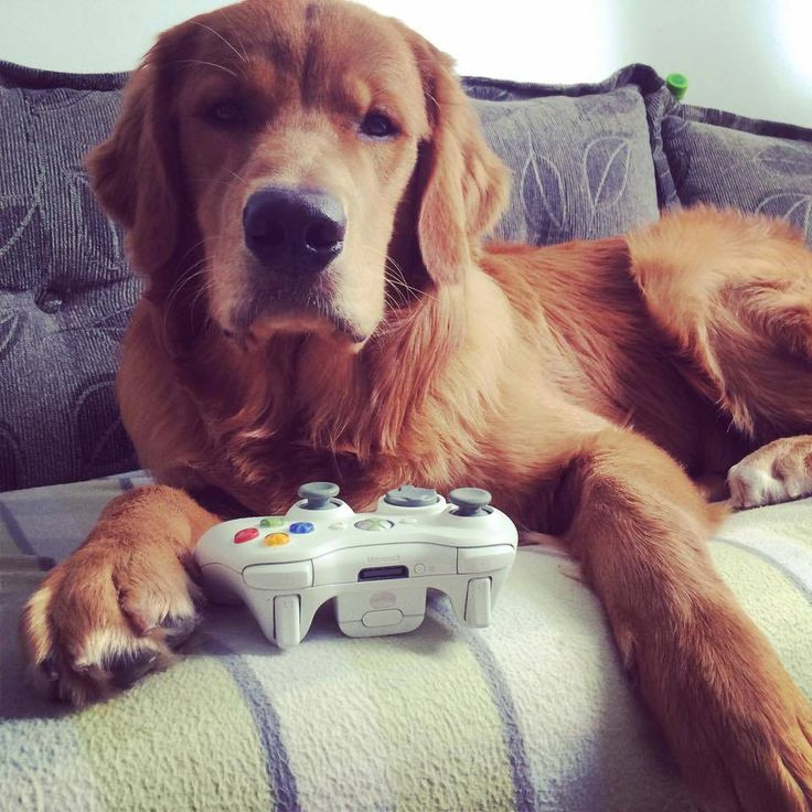 This is not what I meant when I said play.... Best dogs