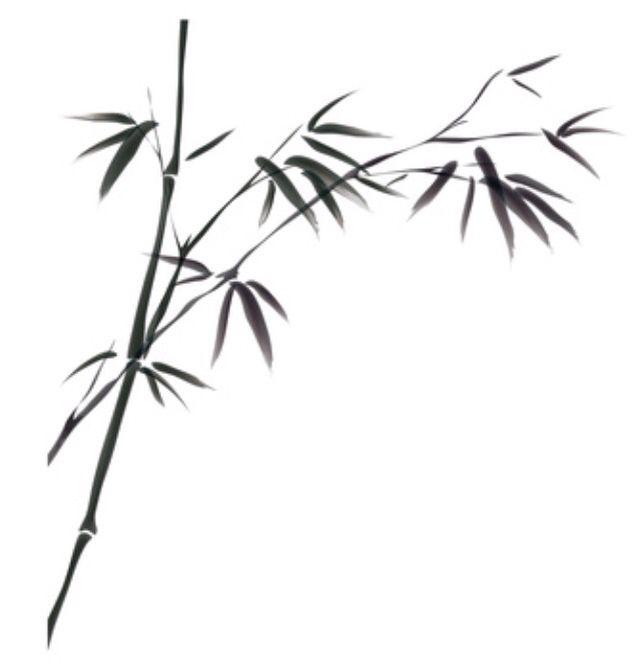 Bamboo tattoo idea