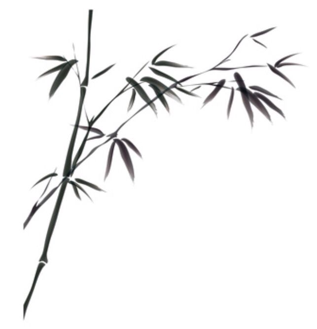 Bamboo tattoo idea