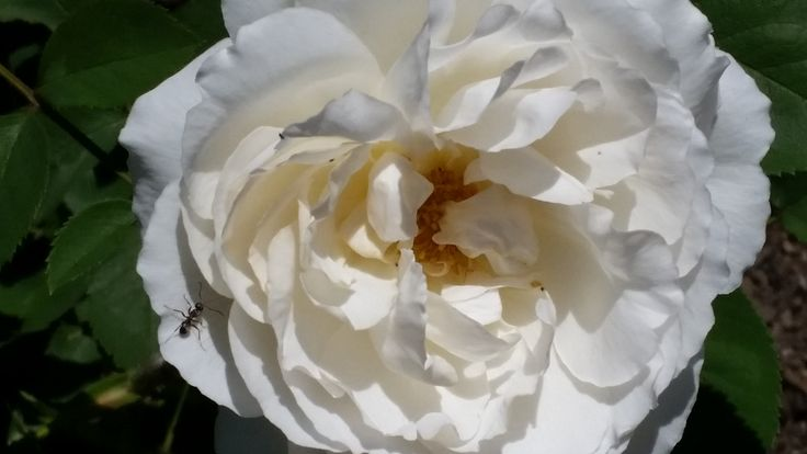 IMAGE POST: Roses have always been one of my favorite flowers, especially to photograph. #roses #photography #gardens #flowers #gardening #website Via @GardenRockin