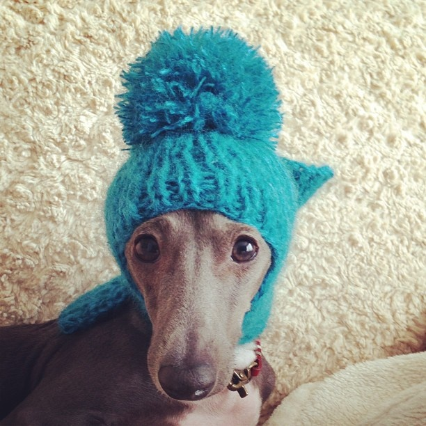 1000+ images about Greyhounds in hats on Pinterest ...