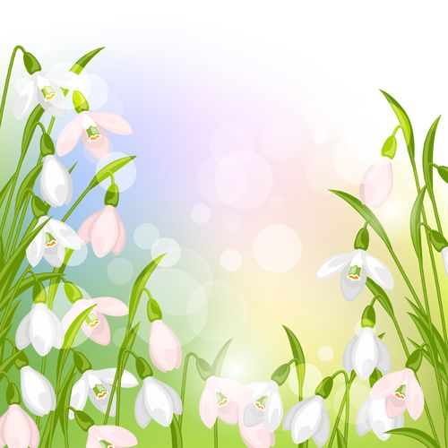 snowdrops flowers with shiny background vector free