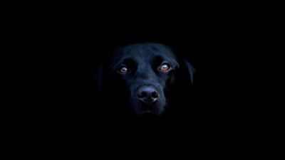 Dog Photo Art by Trellis Haynie - #fireworks #software