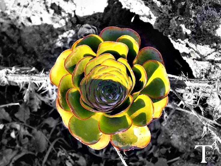 Verode by ToniTeror.deviantart.com on @DeviantArt