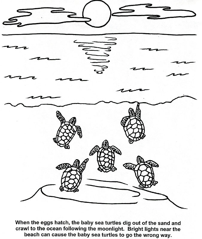 Coloring Pages Of Aquatic Animals : Sea turtle and other aquatic animals coloring pages