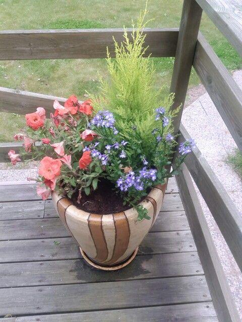 Summerflowers/kesäkukkia