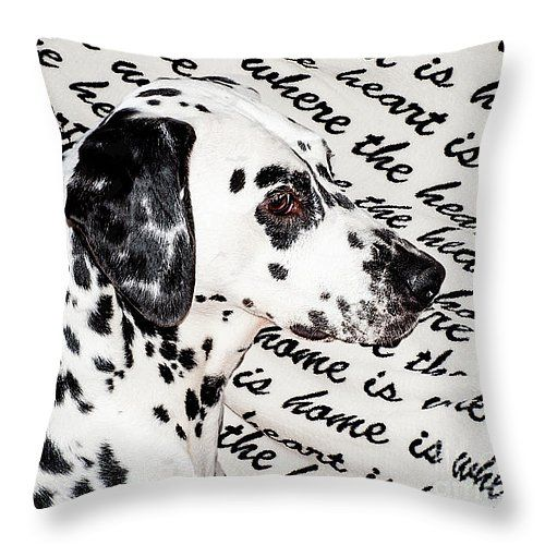 Where the Heart is Home Where the Heart Is. Kokkie. Dalmation Dog by Jenny Rainbow. #DalmationDog #Dog #Dalmation #Breed #Spring #SpringTime #Animal  #BeautifulDog #Netherlands #Holland #Dalmatian #ArtForKids #KidsRoom
