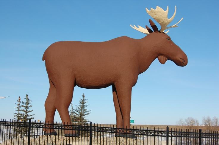 Mac the Moose - Moose Jaw SK
