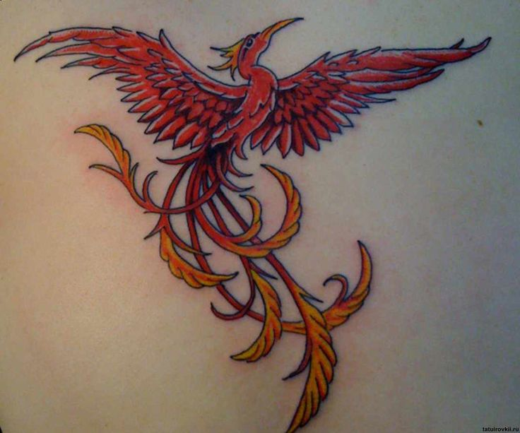 tatoos-design-bird-meaning-phoenix-tatoo-13622.jpg (1067×889)