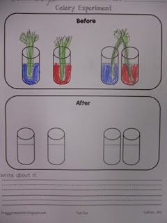 BEFORE results of Celery Experiment Science Teaching
