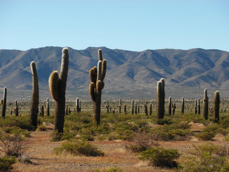 National Park Los Cardones (Salta)