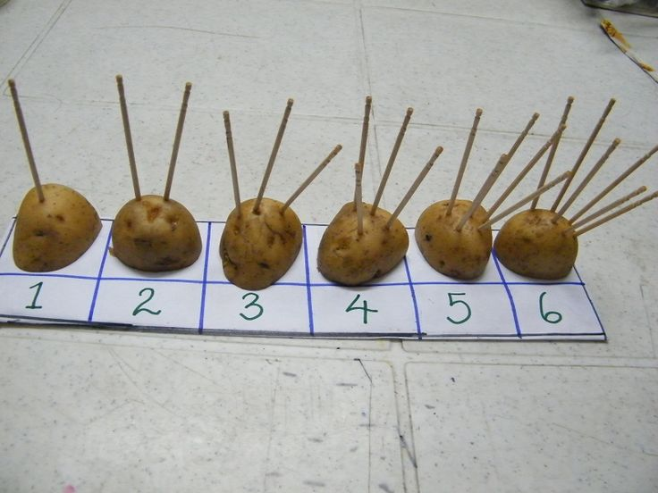 Potato Counter - This activity works on pincer grasp and hand strengthening by placing and counting toothpicks on fruits and vegetables.