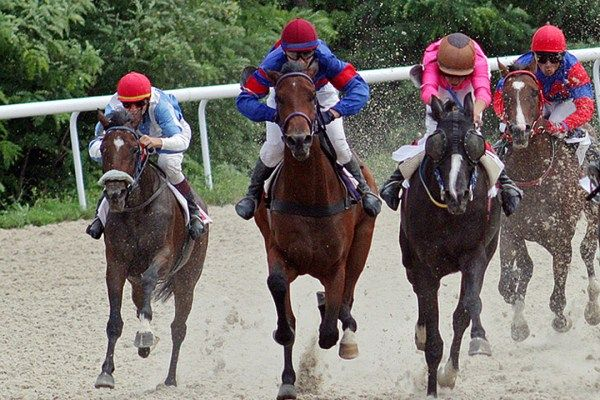 Watch a Horse Named Horsey McHorseface Win a Horse Race [VIDEO]