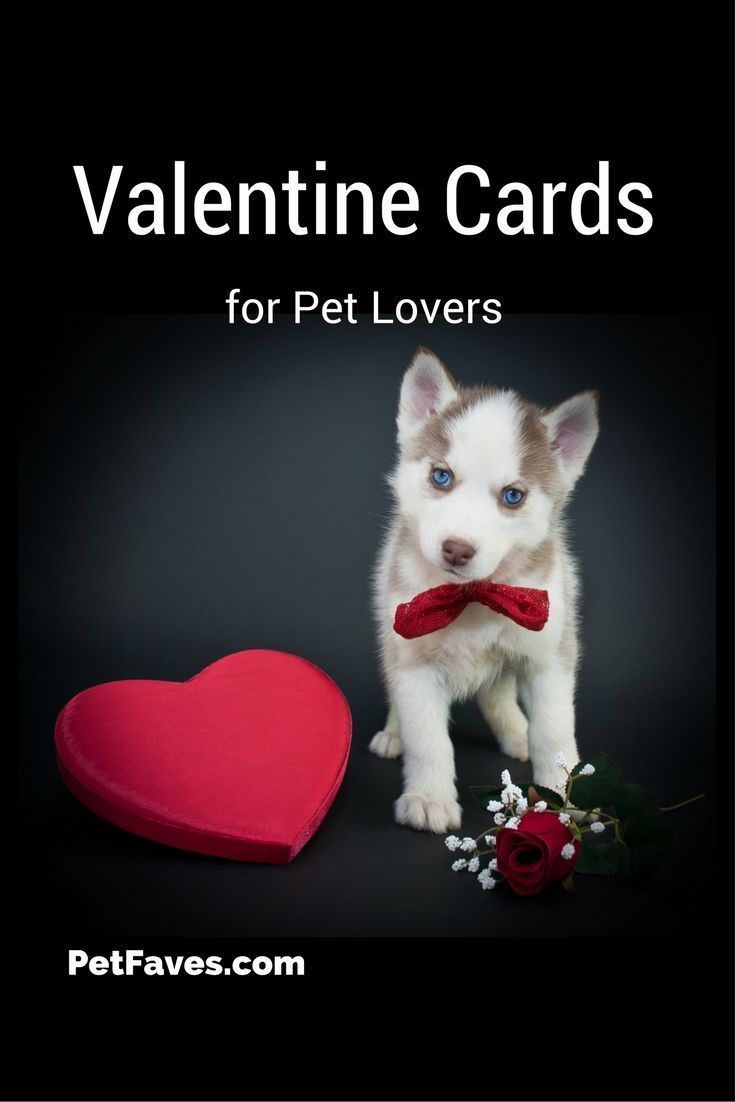 Show Your Love With These Valentine Cards For Pet Lovers Animal Lover Puppy Love Quotes Valentines Day Dog