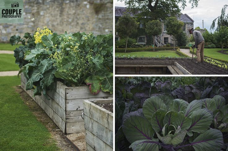 The amazing vegetable garden at Cliff At Lyons. Weddings at Cliff At Lyons by Couple Photography.