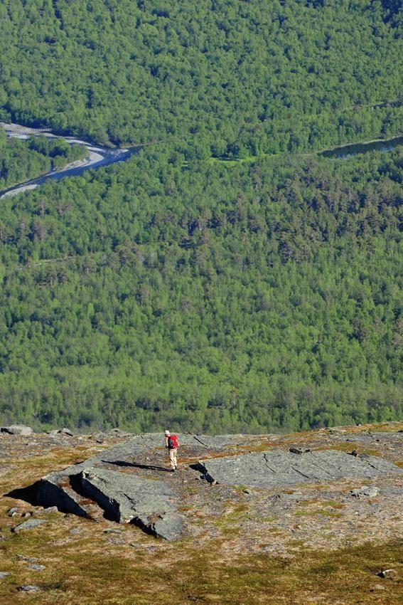 Summertime in Abisko in the Kiruna Mountains, Sweden.