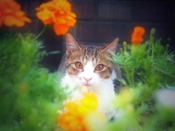 cat in the garden.