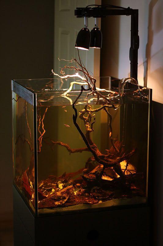 Blackwater biotope for Apistogrammas and Pencilfish