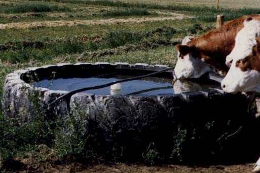 1000 Ideas About Livestock Water Trough On Pinterest