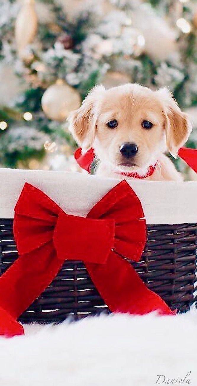No Pin Limits Christmas Puppy Christmas Animals Christmas Dog